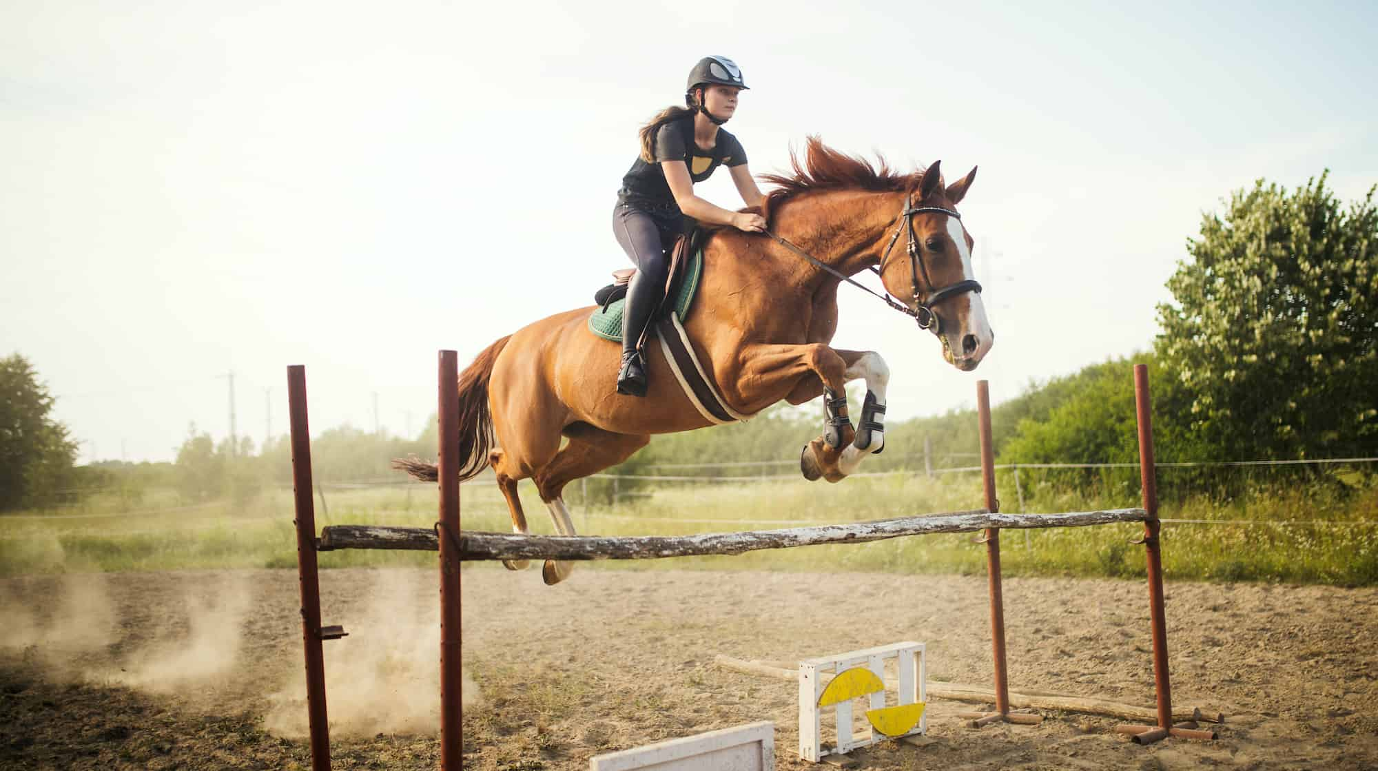 young female jockey on horse leaping over hurdle 8SHLQA3