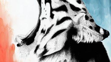 Dreamy Tiger © Kelsey Emblow