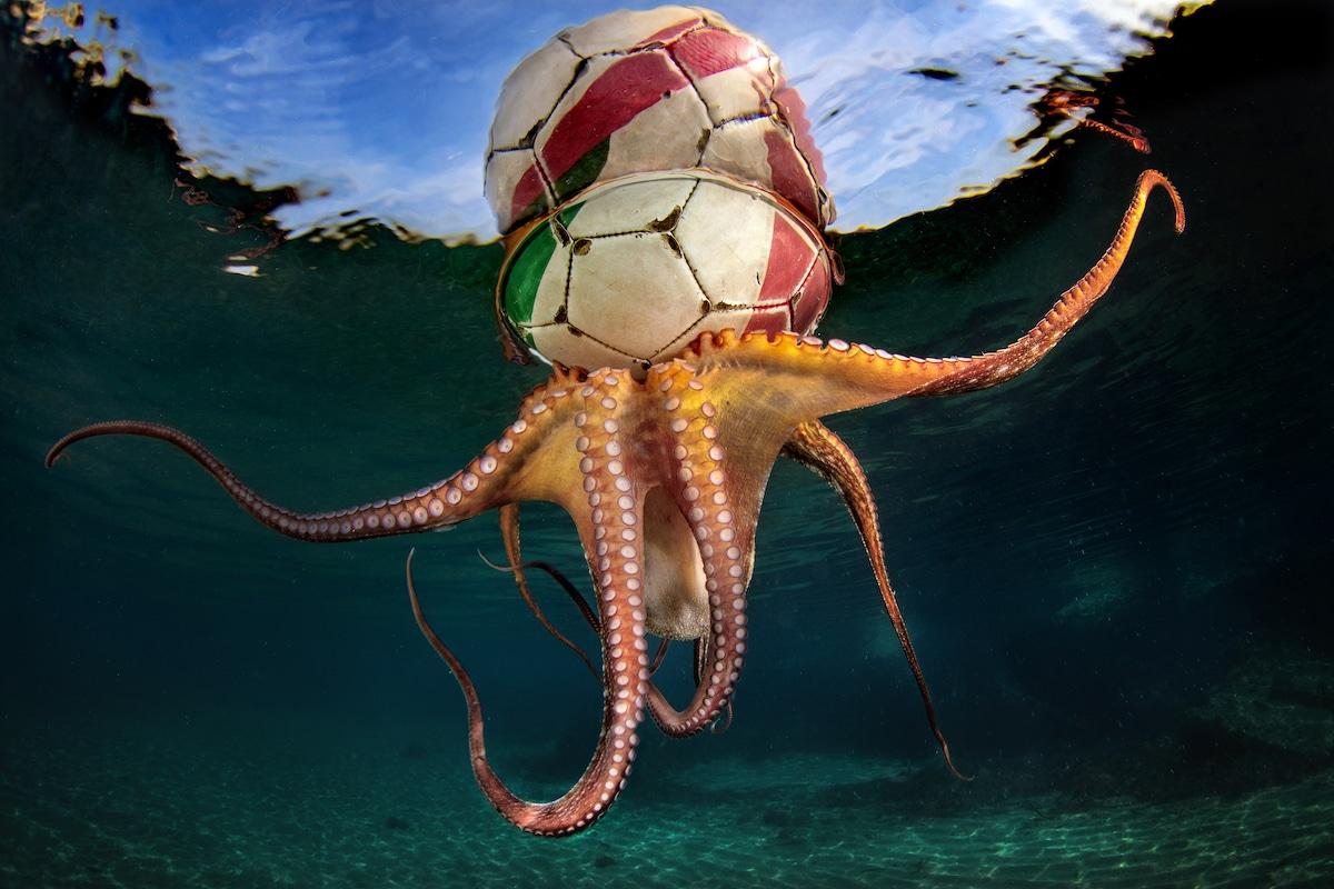 Underwater Photographer of the Year 2020 401 pasquale vassallo
