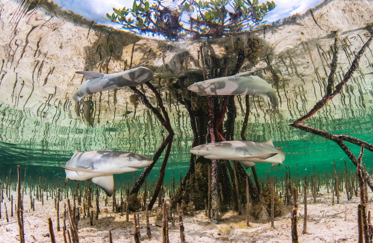 Underwater Photographer of the Year 2020 801 Anita Kainrath