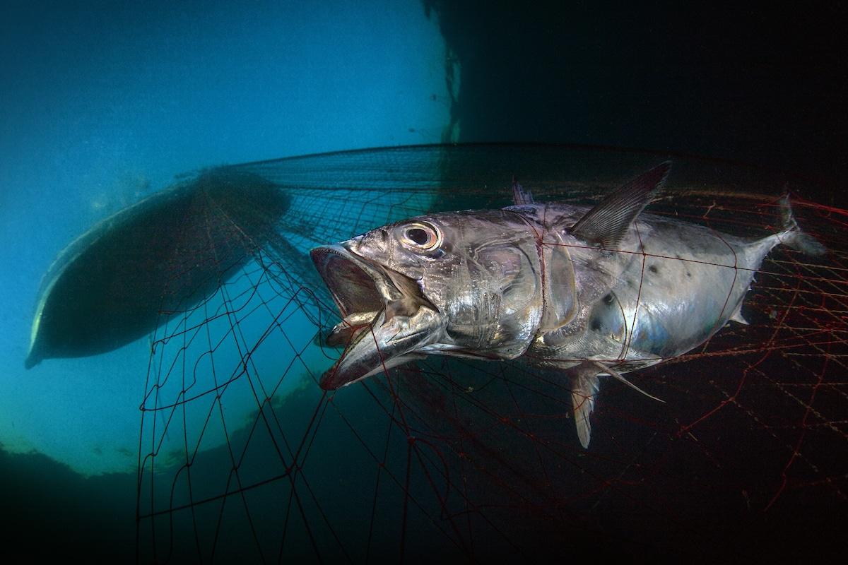 Underwater Photographer of the Year 2020 9901 pasquale vassallo