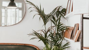gray fan beside indoor green plants