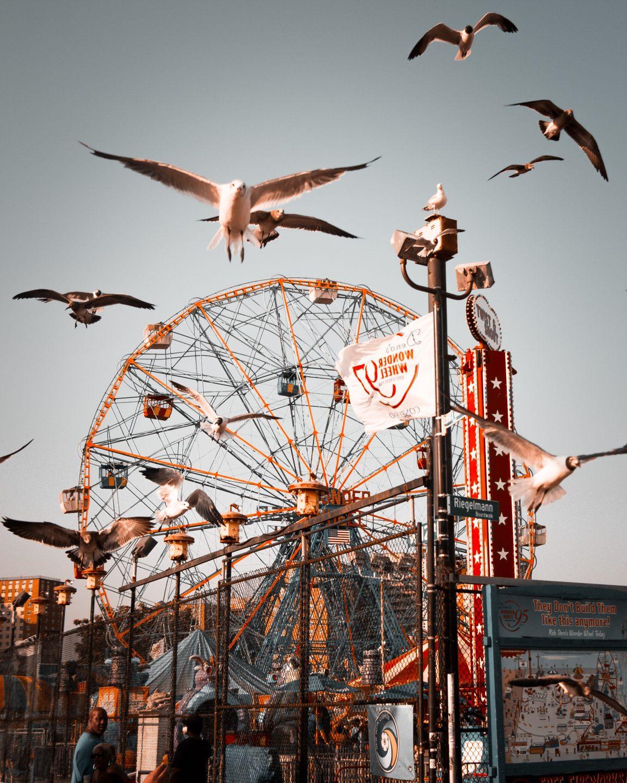 flock of birds flying near ferris wheel