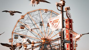 flock of birds flying near ferris wheel