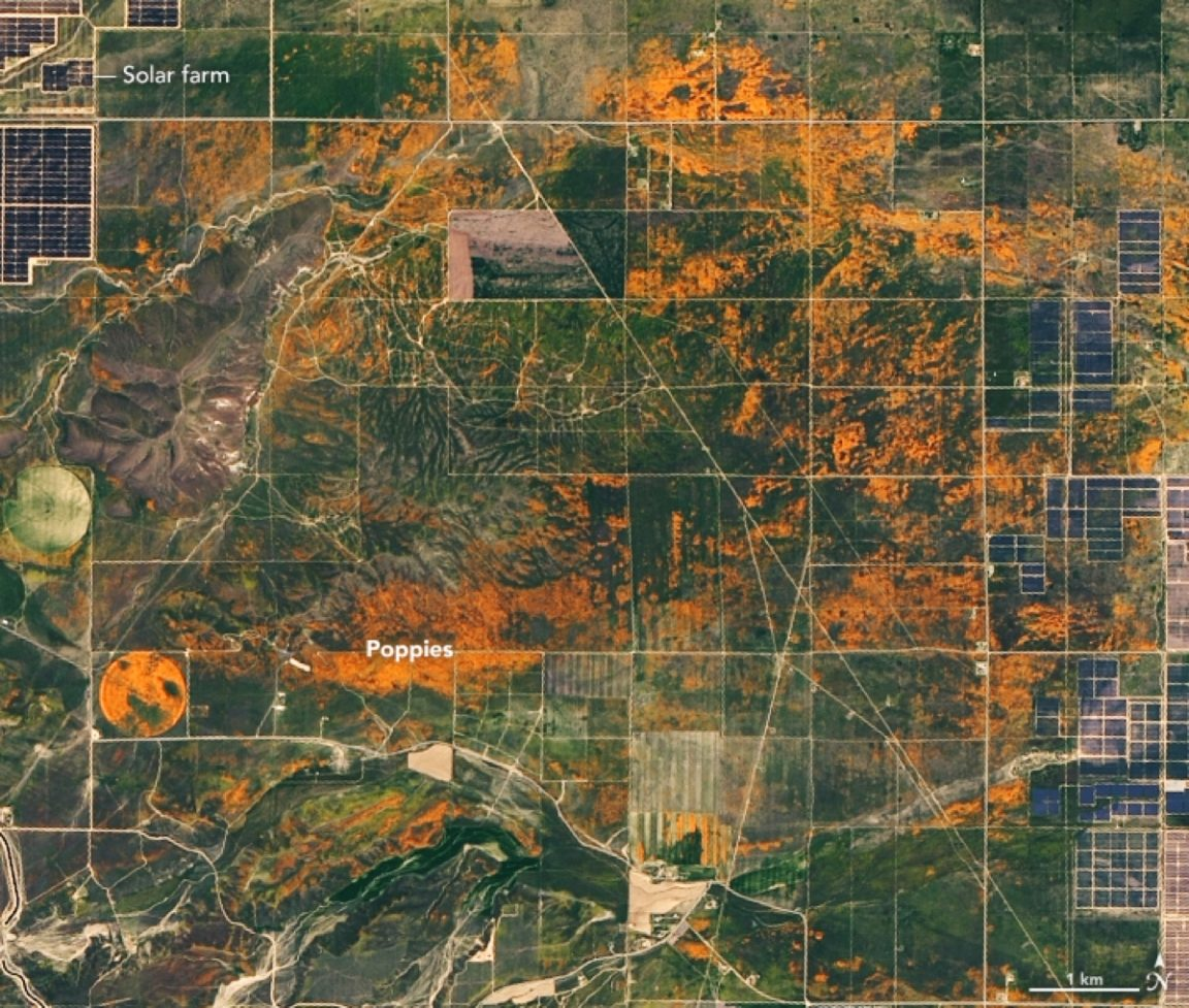 superbloom california poppies nasa2