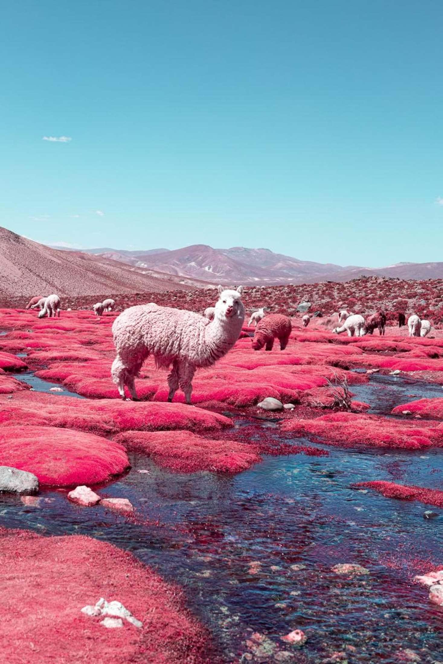 Pettigiani Infrared Peru webready master
