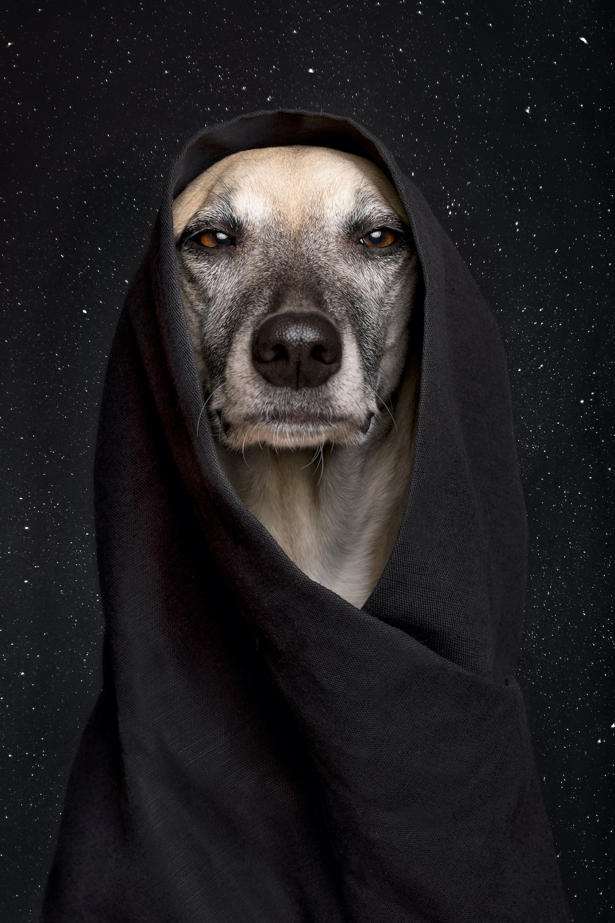 elke vogelsang dog photography 12
