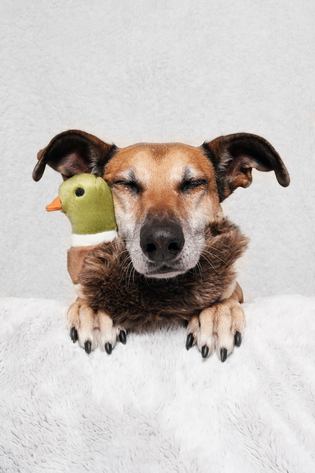 elke vogelsang dog photography 19