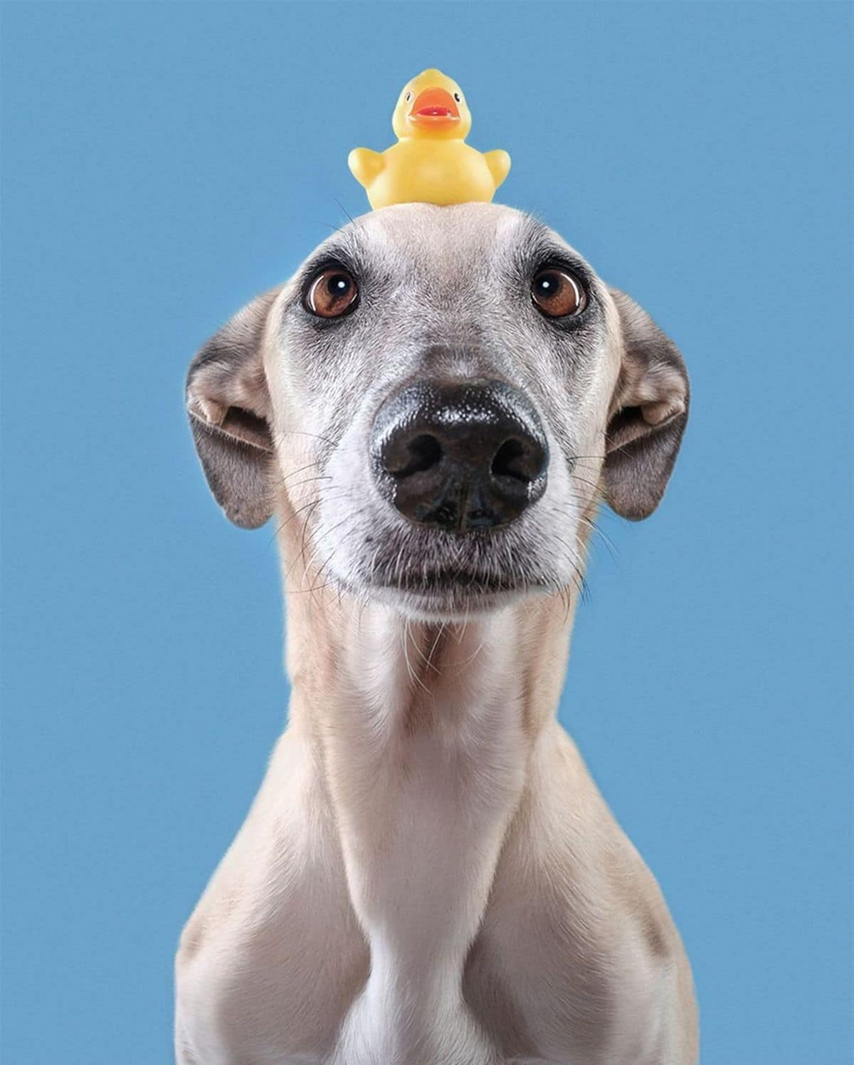elke vogelsang dog photography 5