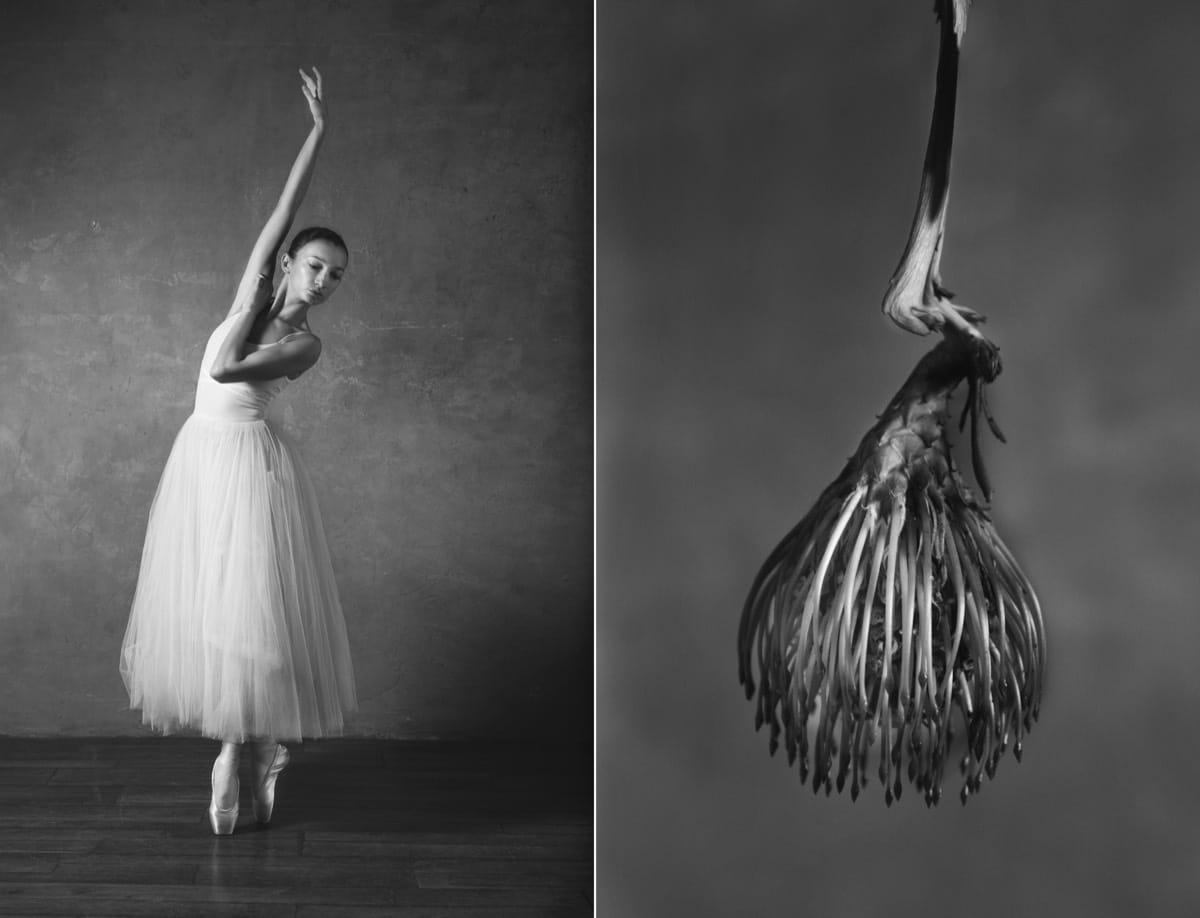 yulia artemyeva ballet flowers 12
