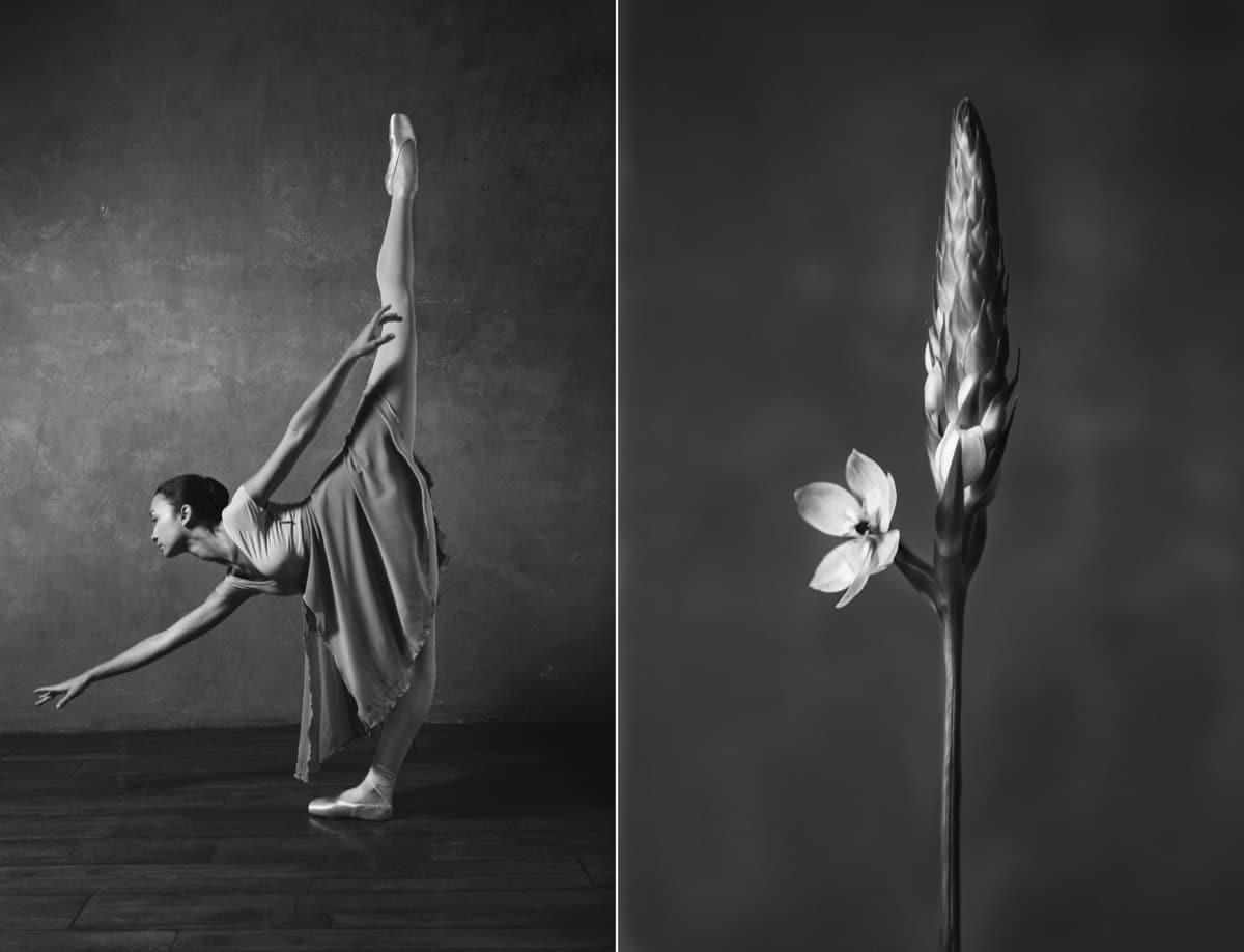 yulia artemyeva ballet flowers 13