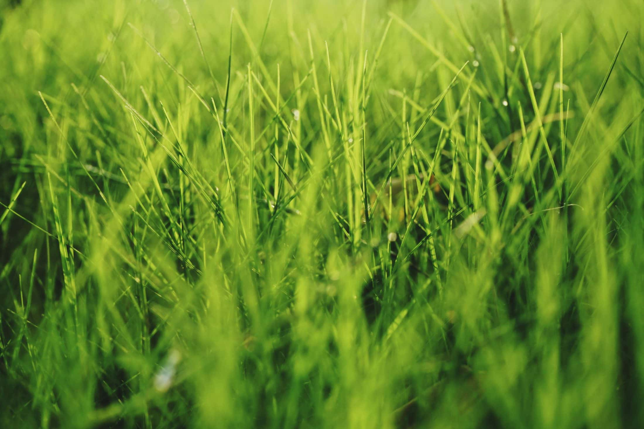 green plant field