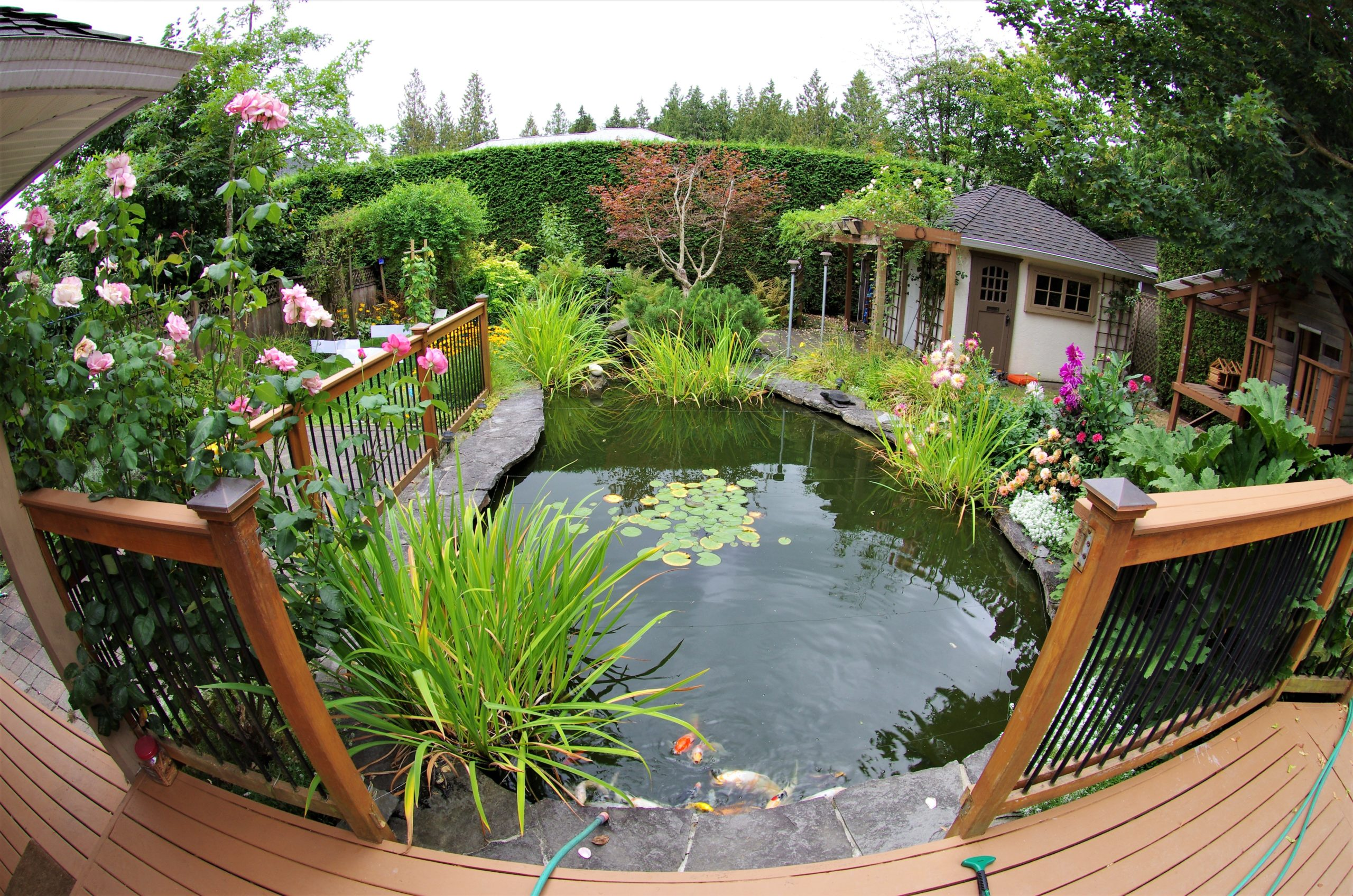 calm water of pond surrounded by plants and flowers