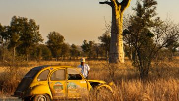 yellow and white volkswagen beetle on brown grass field during daytime
