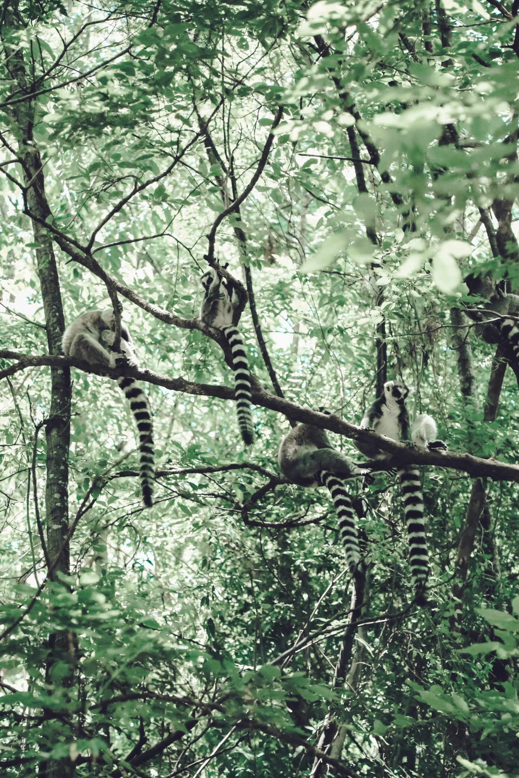 sugar gliders on tree branch during daytime