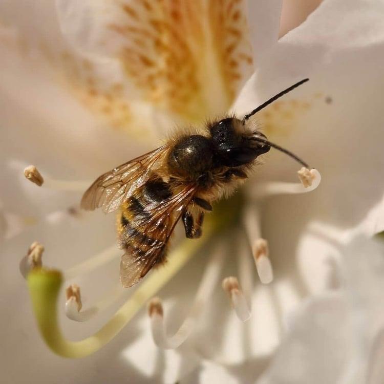 Space10 Bee House Ikea 1 e1595451772167