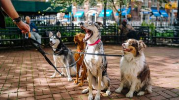 four dogs on park