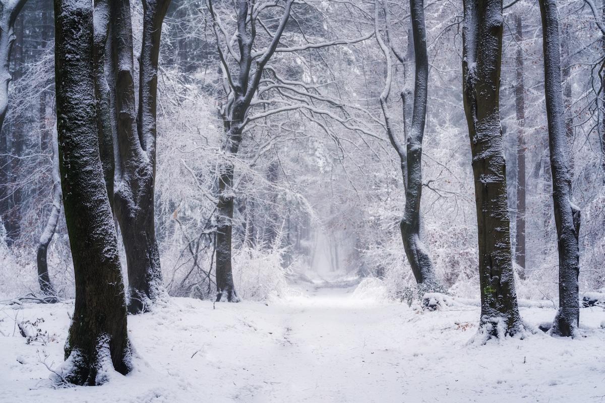 Speulderbos Seasons Albert Dros 22
