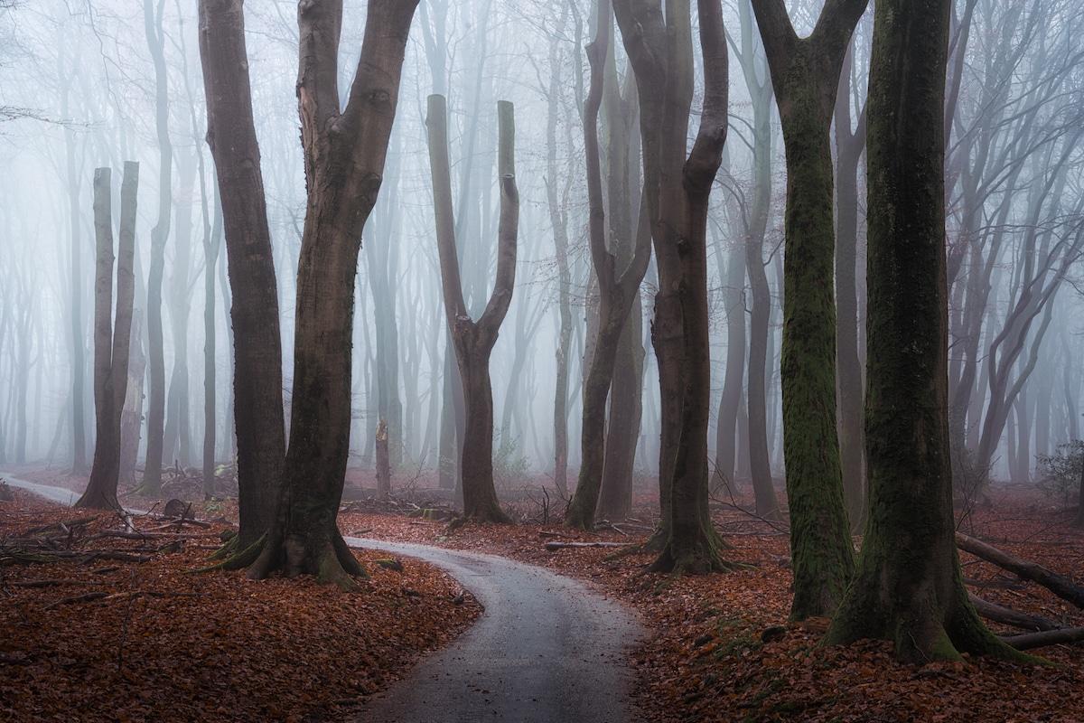Speulderbos Seasons Albert Dros 38