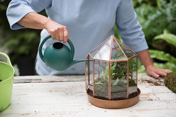 how to plant a terrarium 15 how plant terrarium