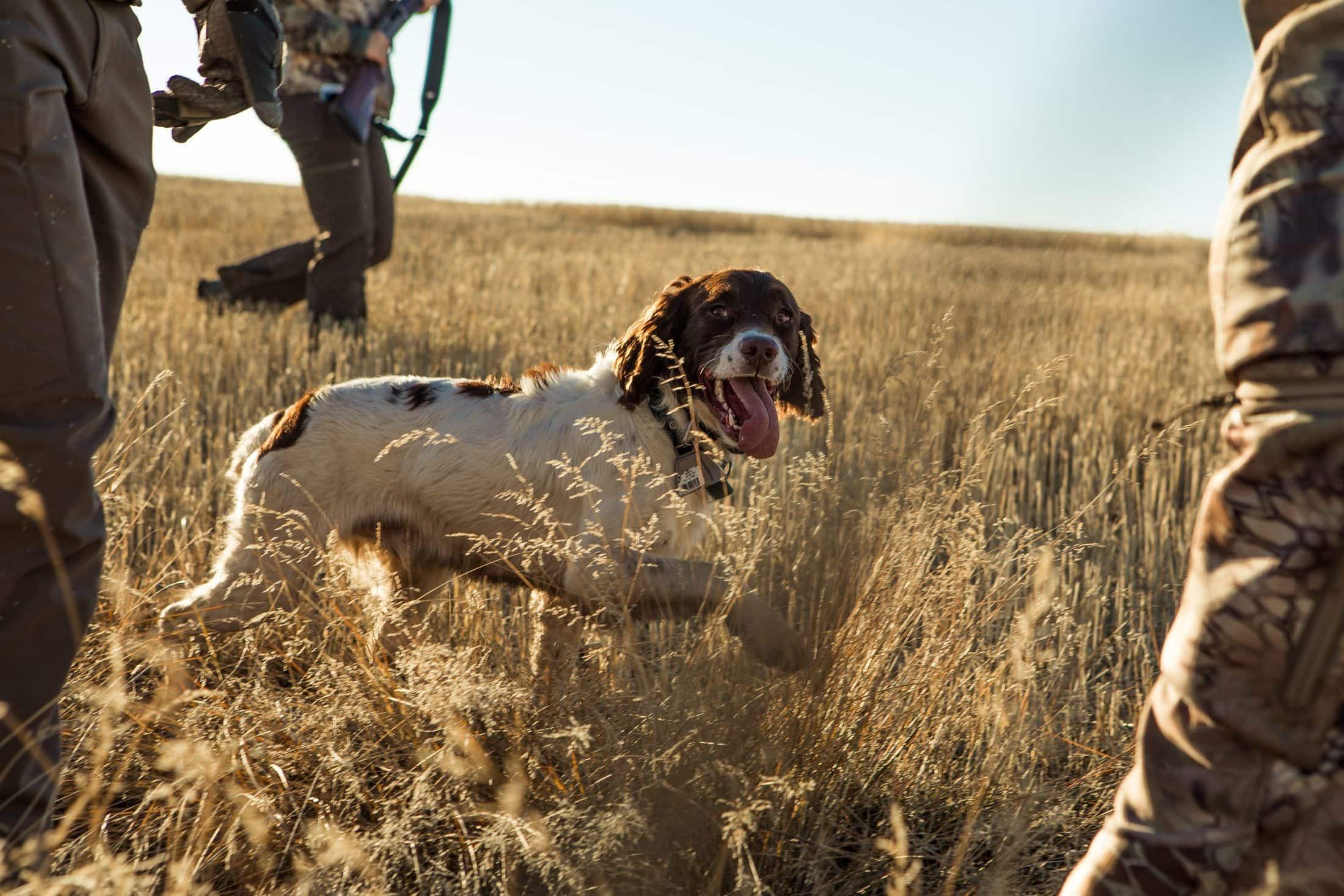 white dog on grass field
