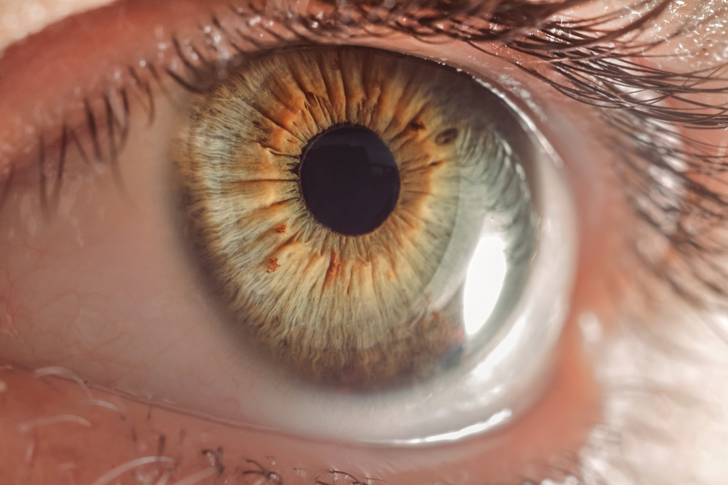macro eye PTTA82T