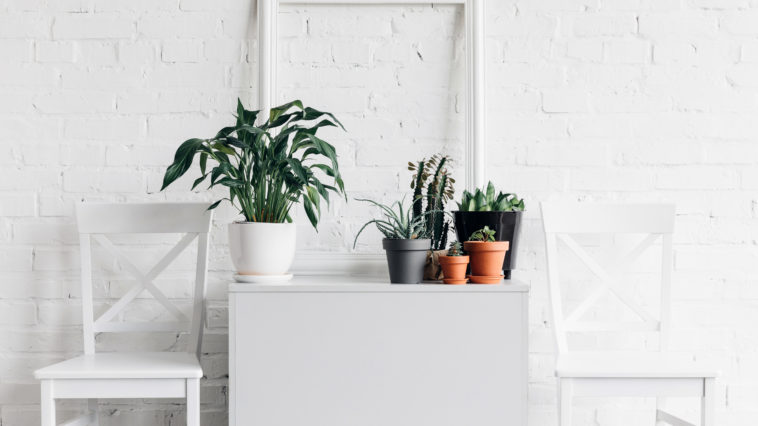 house decor with houseplants in front of white bri RQ6MD9Z