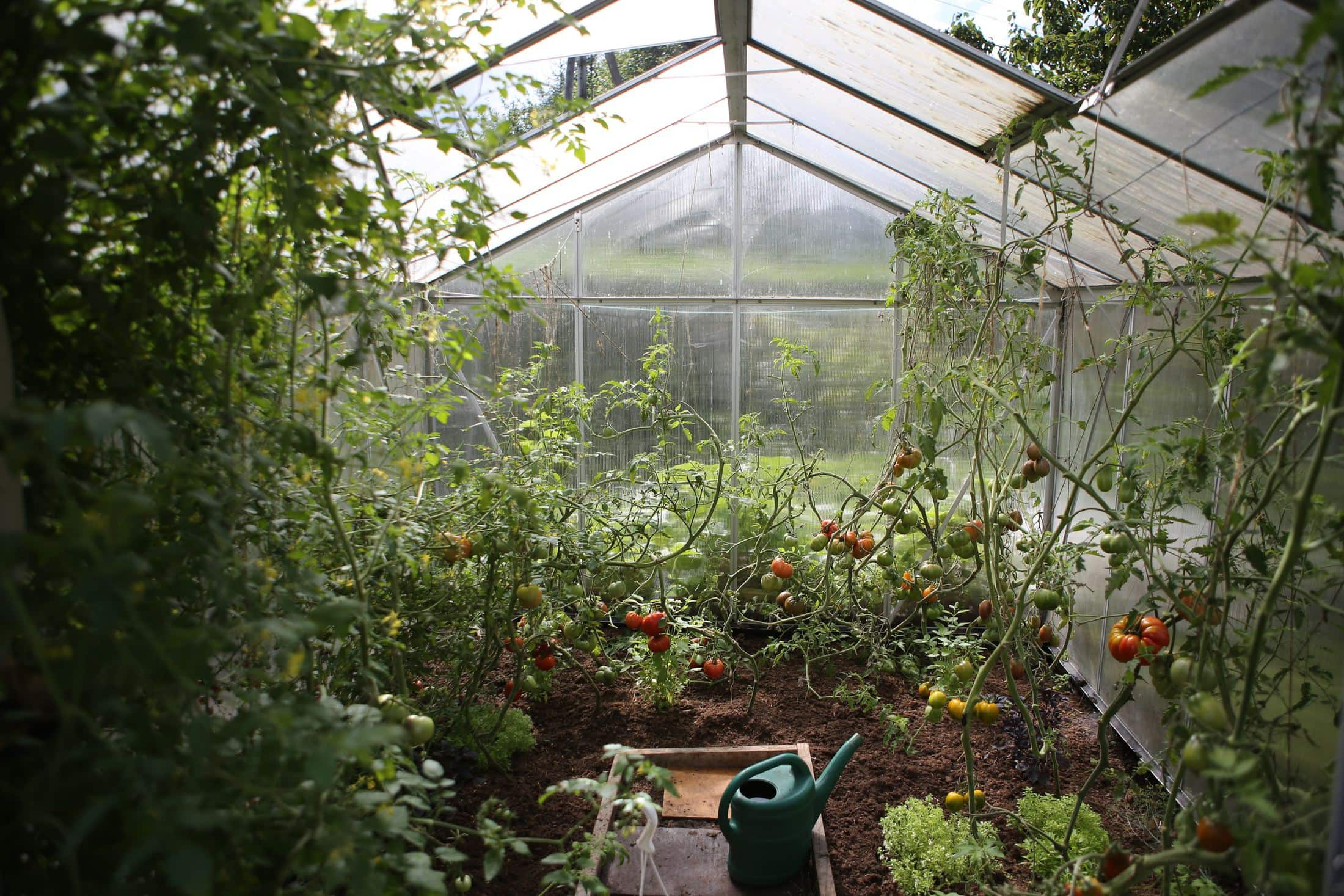 green watering can in green house