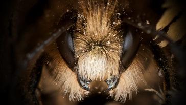 JoshForwood Bees 001