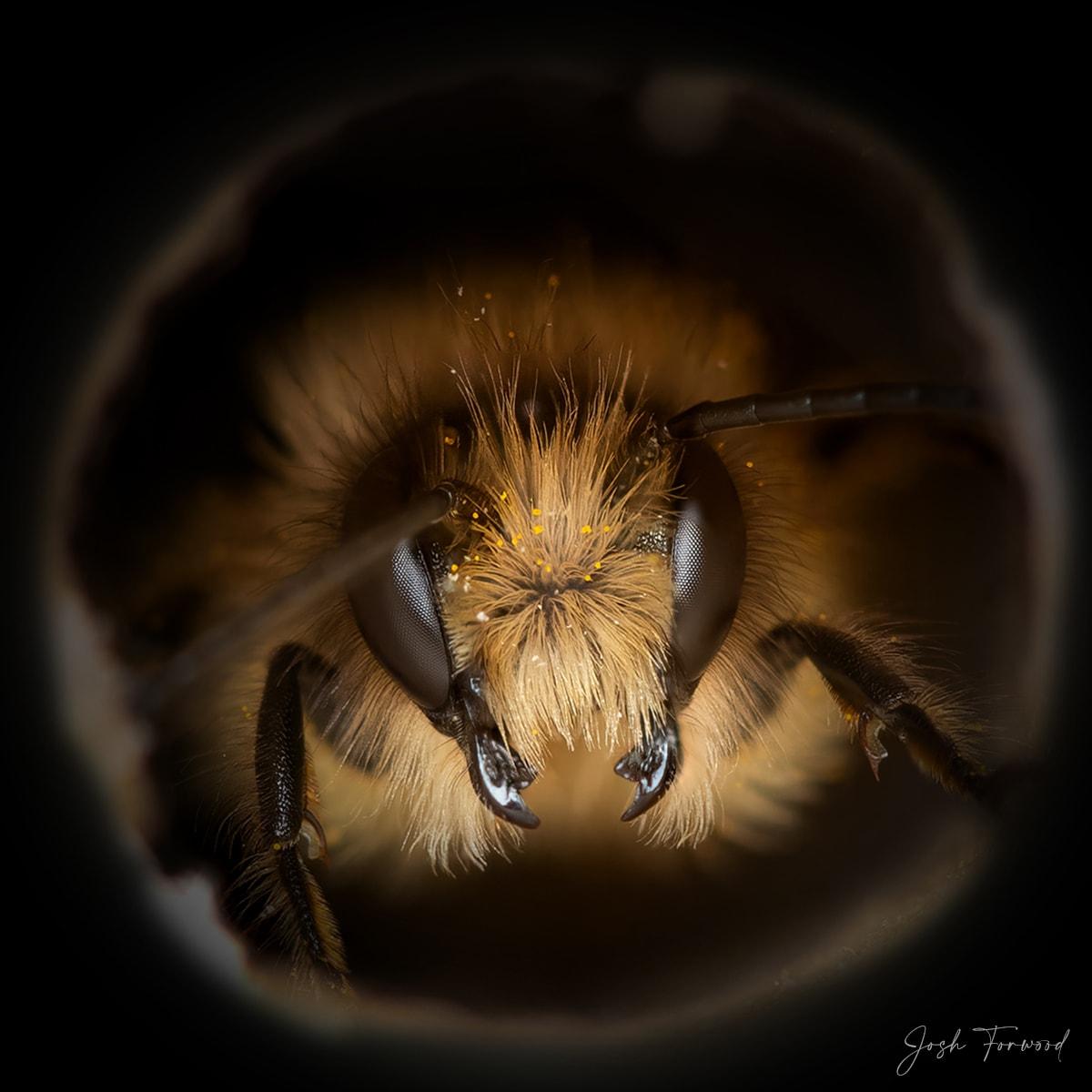 JoshForwood Bees 002