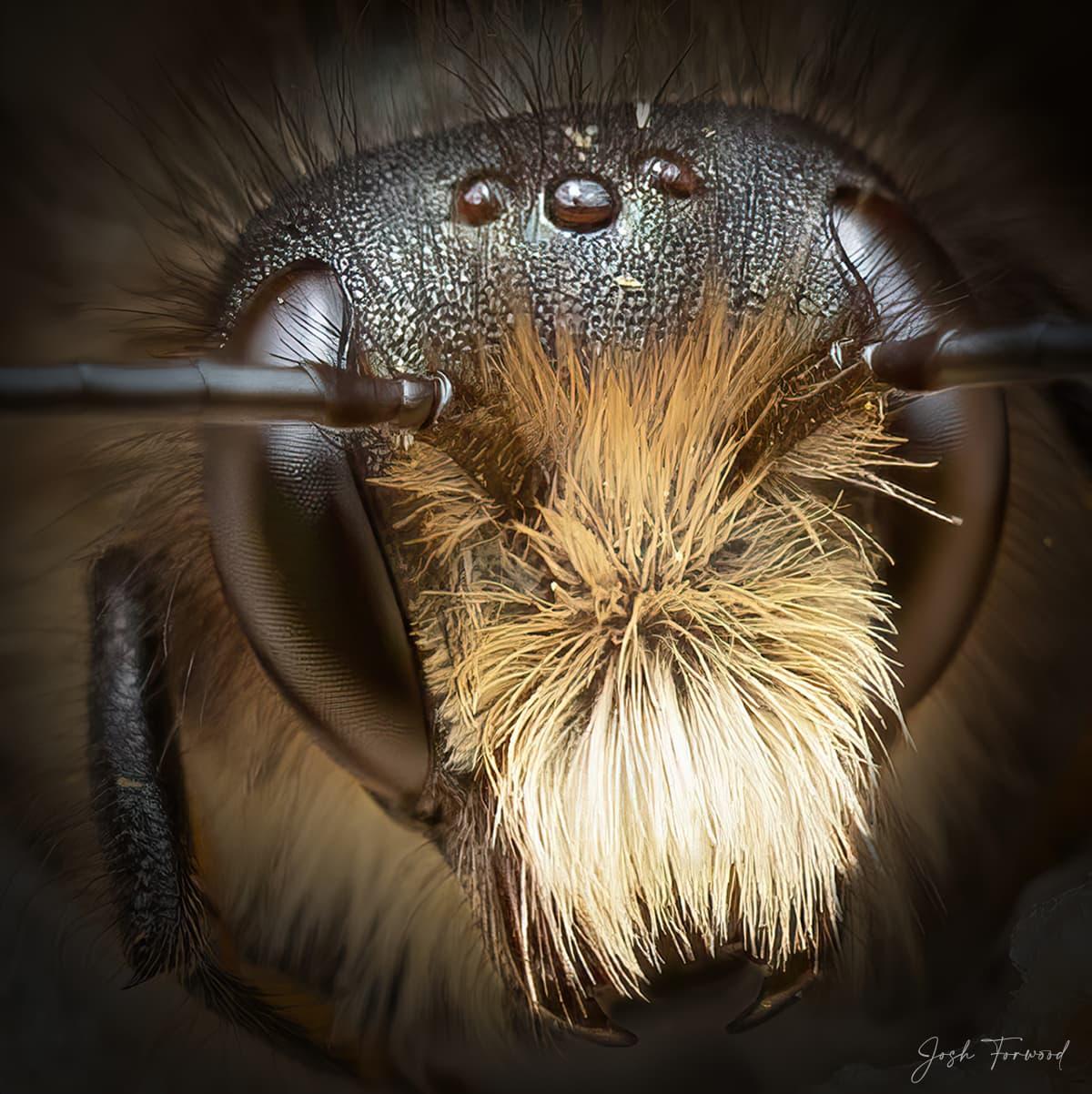 JoshForwood Bees 004