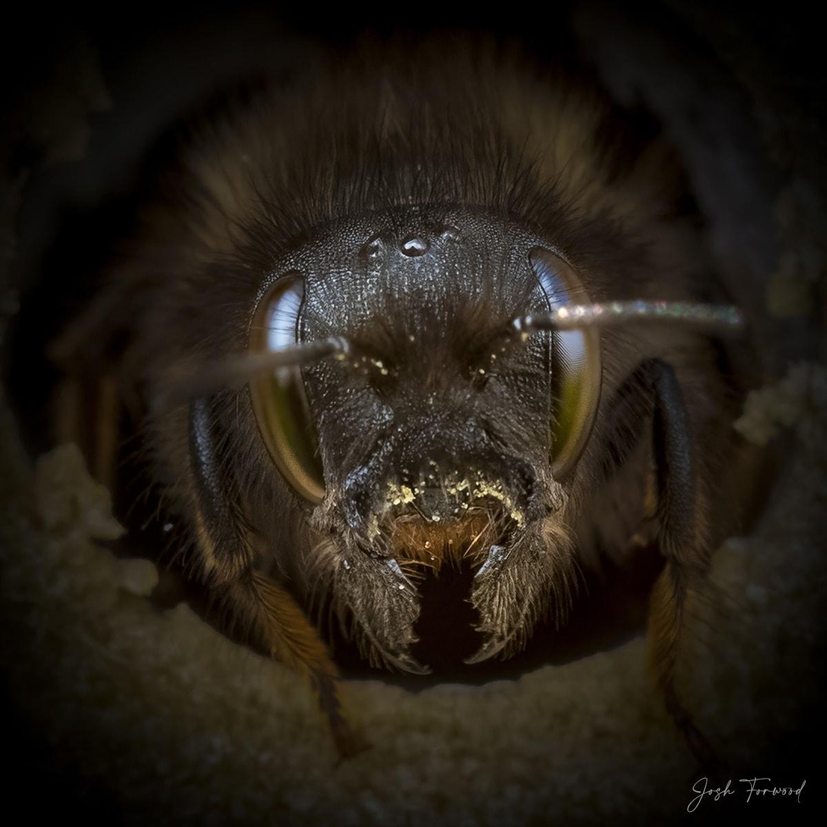 JoshForwood Bees 006