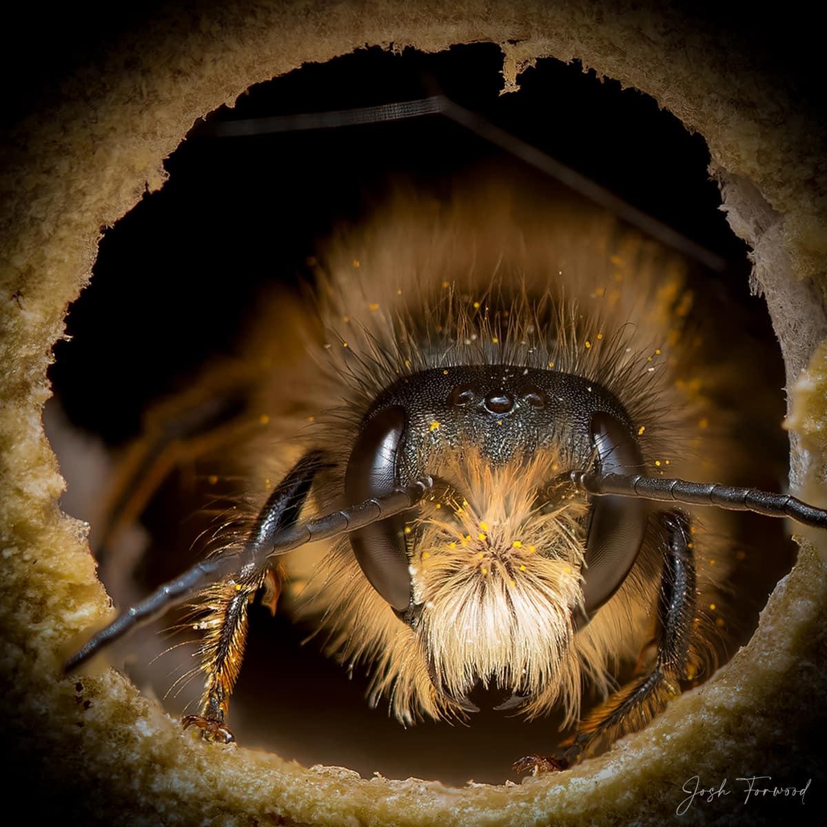 JoshForwood Bees 007