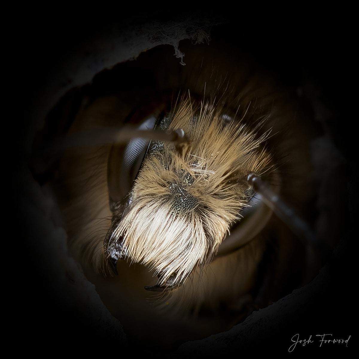 JoshForwood Bees 008
