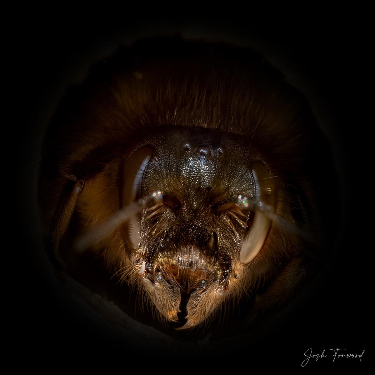 JoshForwood Bees 009