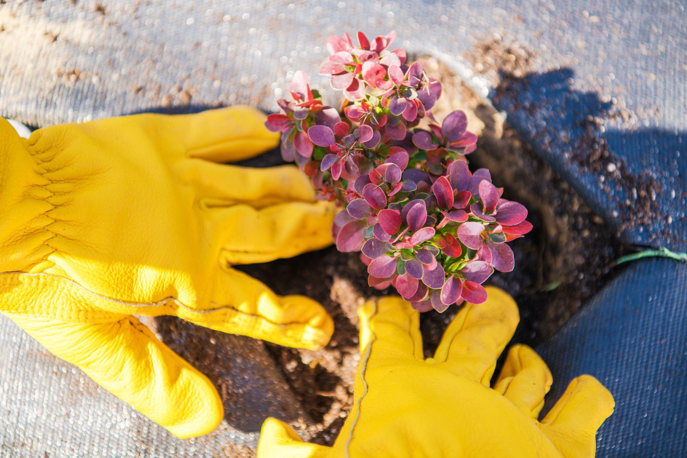 planting garden plants T6ZKHUR