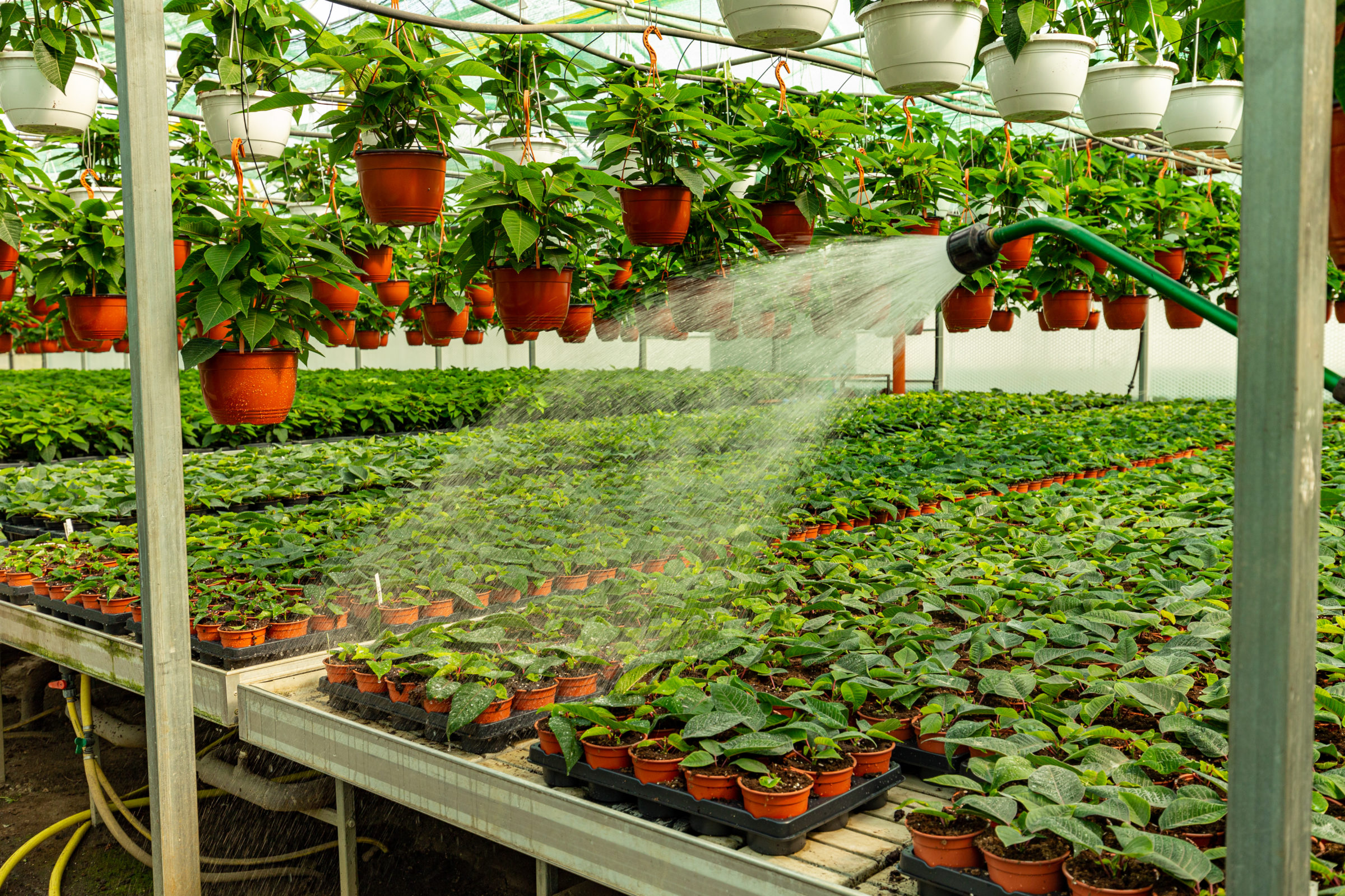 watering plants with garden hose XB9PXWB