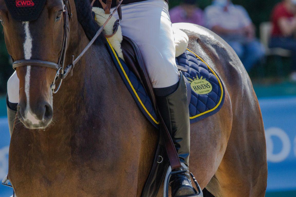 man in white shirt riding brown horse during daytime