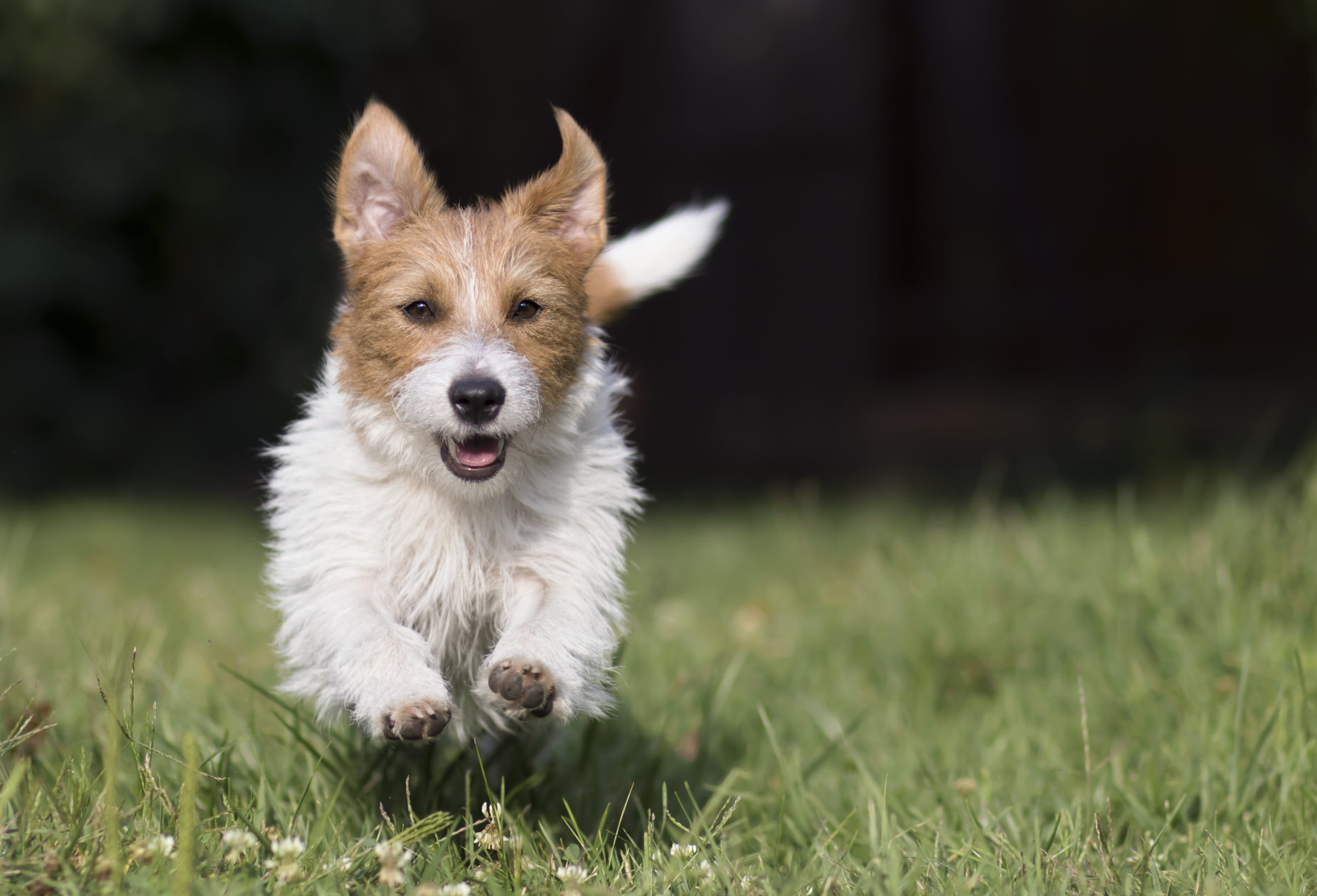 active playful dog 2021 04 05 23 43 03 utc
