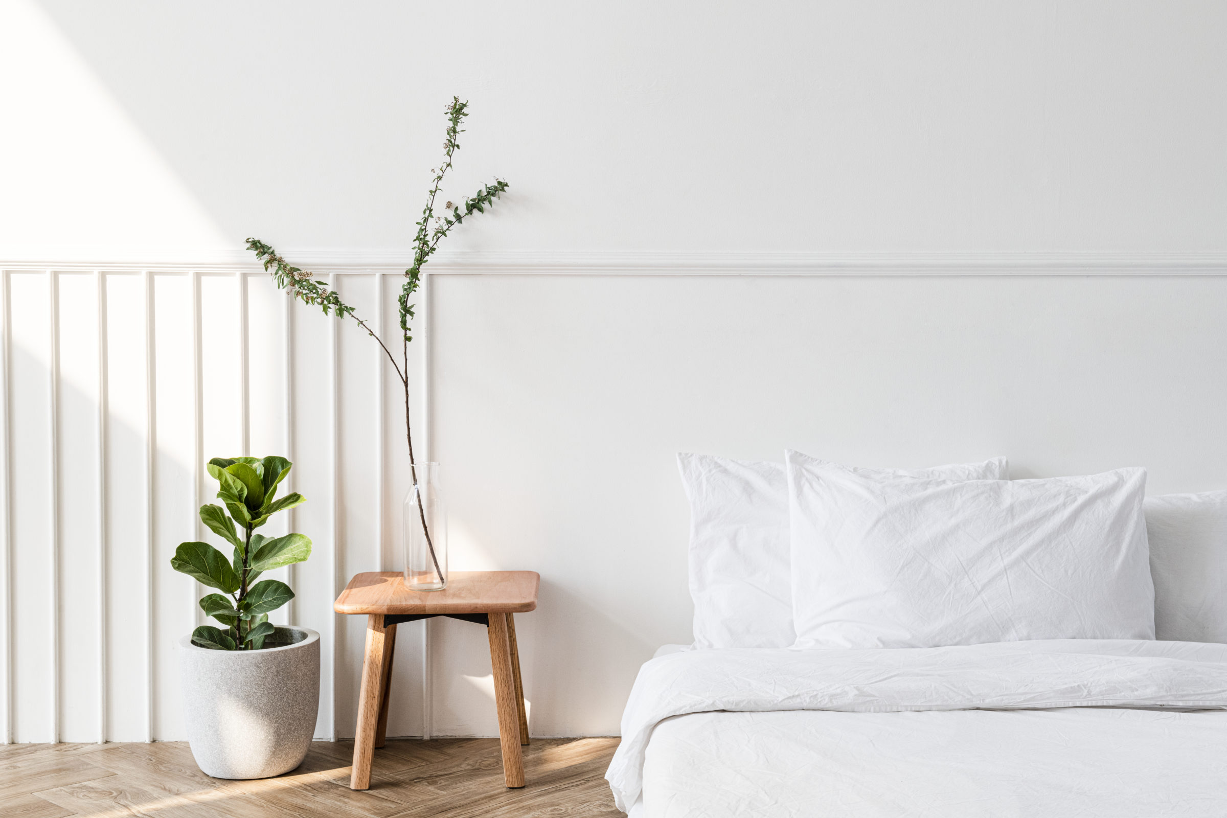 house plants by a mattress on the floor FH22YXF