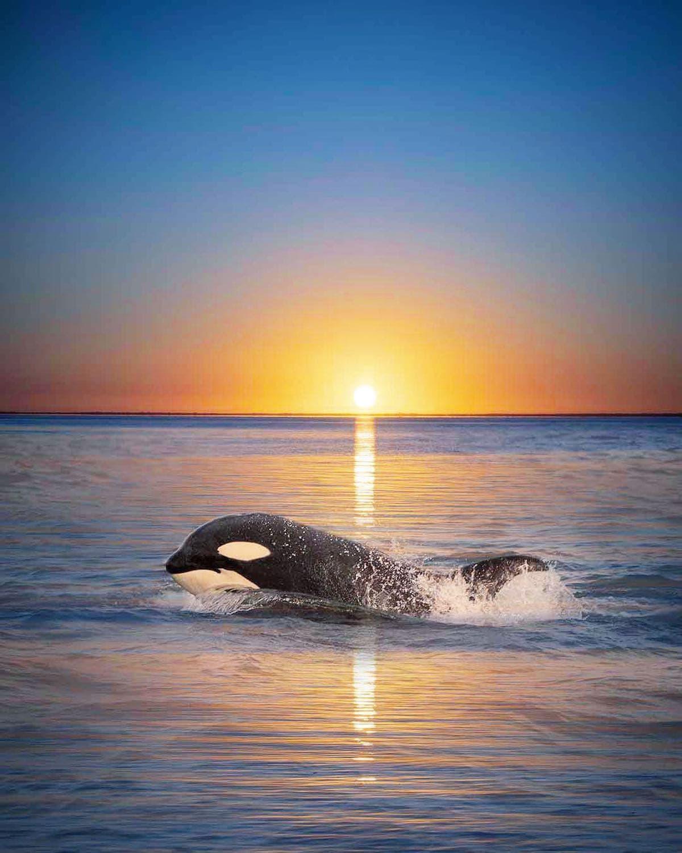 orca sunset marys mark photography 1