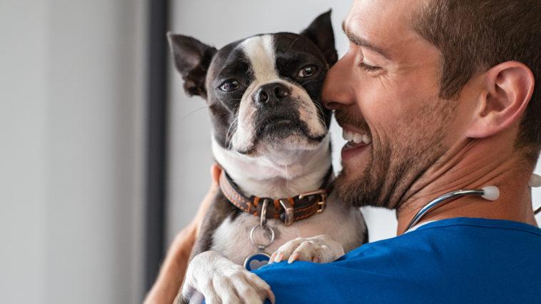 vet cuddling pet dog 2021 04 02 18 57 58 utc
