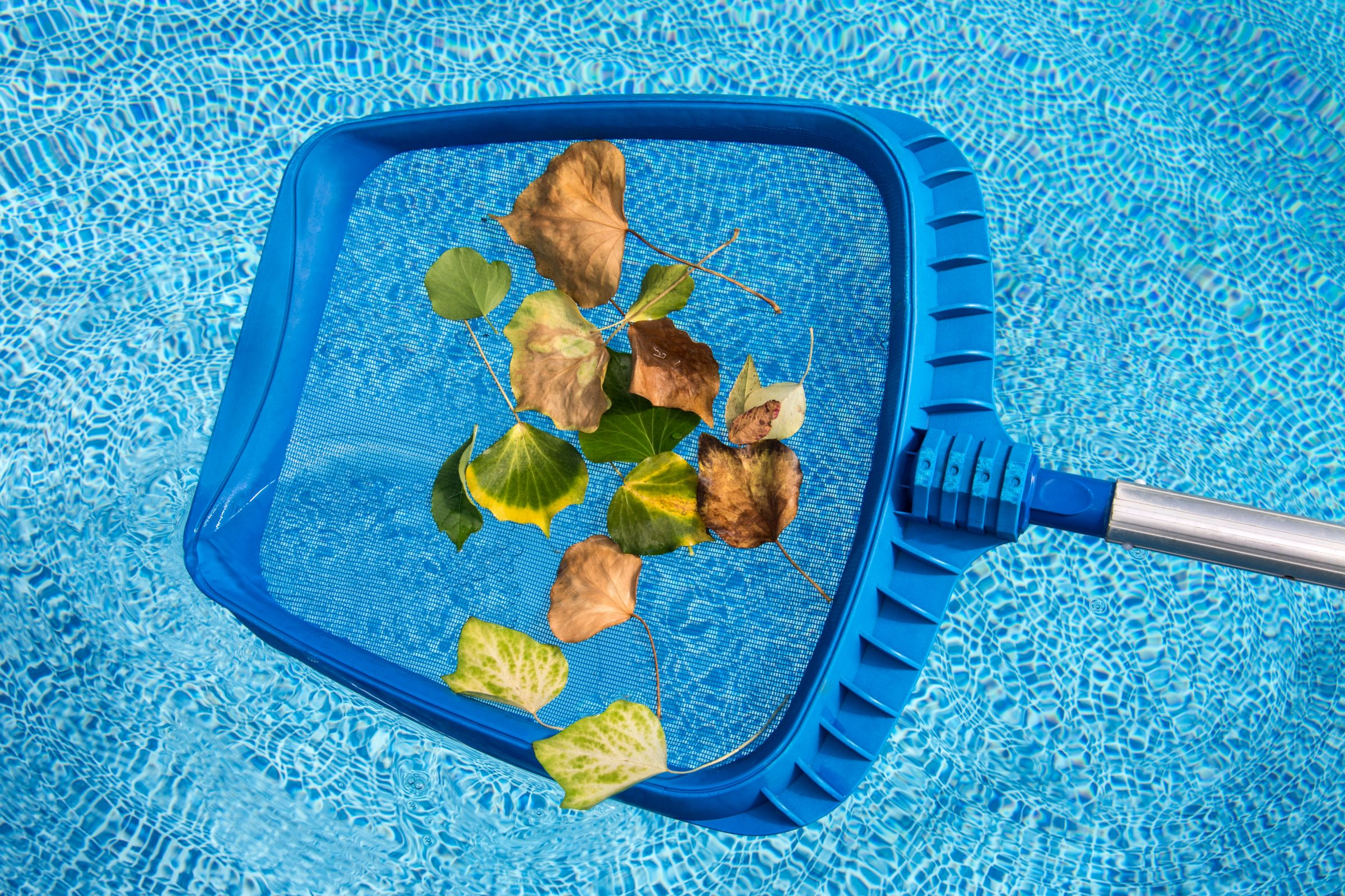 cleaning leaves from the swimming pool 6R8ZY67