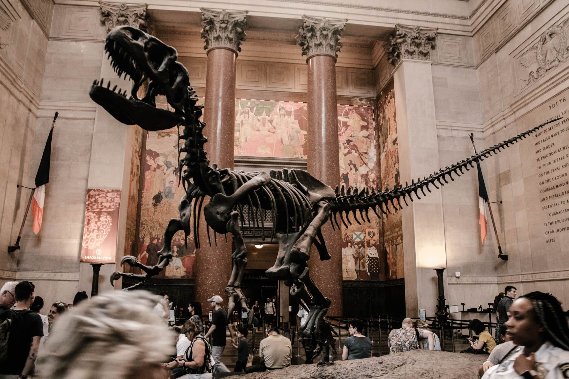 selective photography of t-rex statue