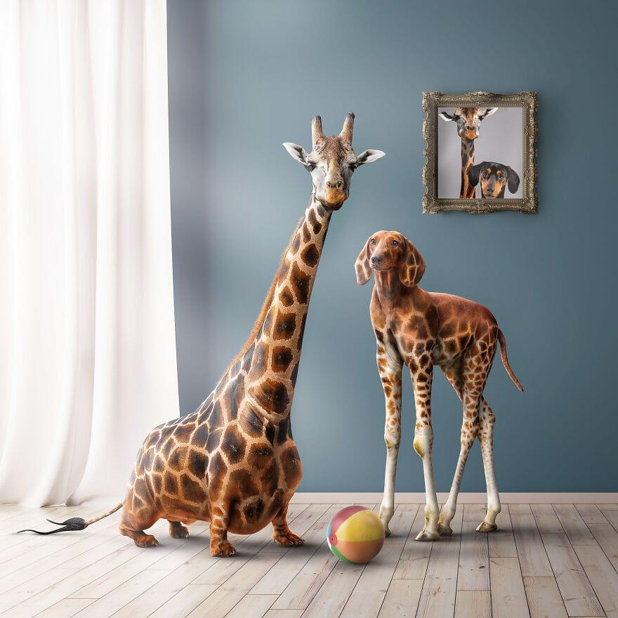 spiel sinn Girachshund and Dachsaffee 60eeacc09ff3b 880